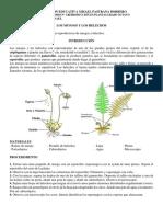 GUIA DE LABORATORIO REPRODUCCIÓN EN PLANTAS.docx