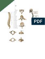 Paso 1 Anatomia PDF