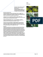 Persea_americana.PDF