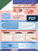 Infografía Del Procedimiento_ Cateterismo Vesical