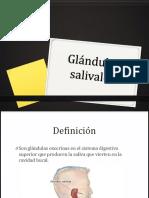 Glándulas Salivales. EXPO 1
