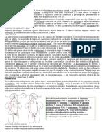 F.A 1ER PFRH.docx