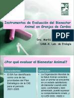 Auditora de Bienestar Animal en cerdos