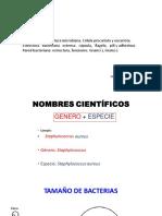 Control Bacterias Caracteristicas Reproduccion