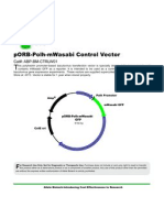 pORB-Polh-mWasabi Control Vector