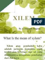 ANTUM_persentase-xilem-1