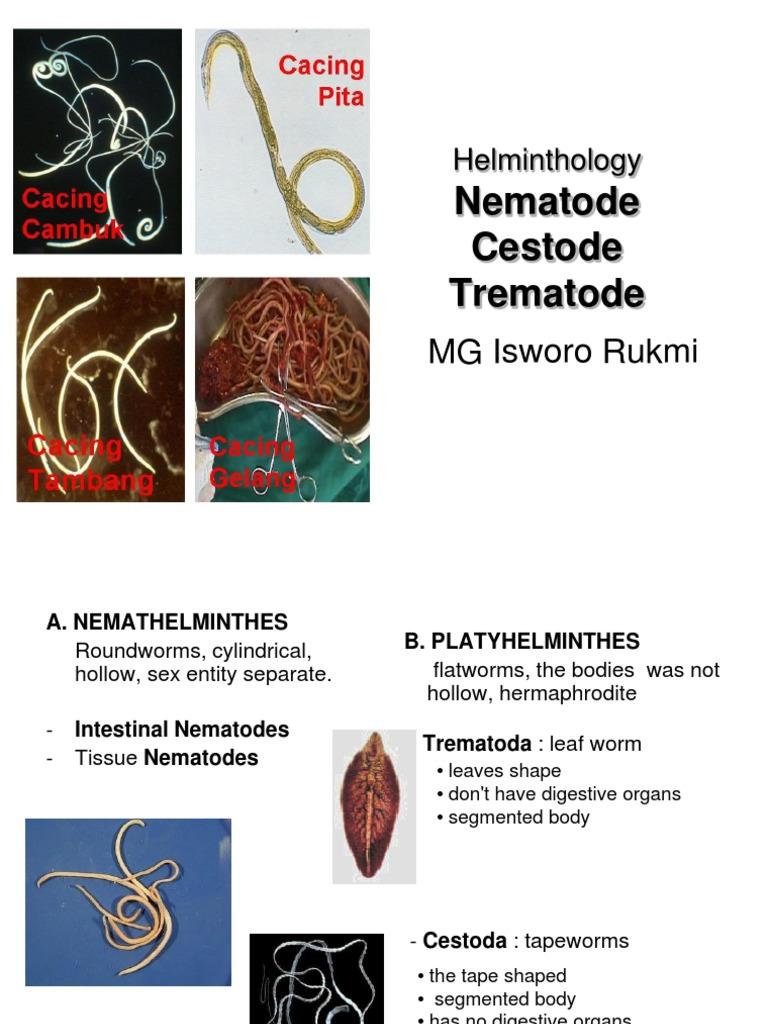 trichinella hermaphrodit pinworm lárva stádium