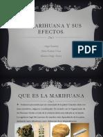 La Marihuana y Sus Efectos