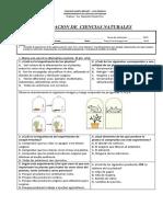 Eval. utilidad de las plantas   PIE 2018.docx