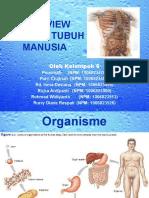 Overview Anatomi Tubuh Manusia