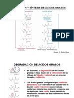 25 Degradación y síntesis de ácidos grasos