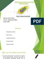 Diapositiva de Celula Procariota