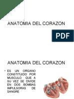 Anatomia Del Corazon1