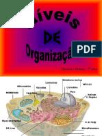 ACROSTICO+DAS+CELULAS.ppt