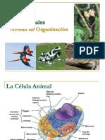 Clase - Tejidos Animales