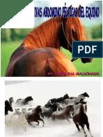 Sistema Digestivo de Equinos y Suinospdf