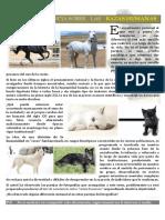 test_conciencia_razas_humanas.pdf
