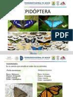 Expo de Lepidoptera Isaac y Hector