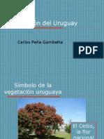 PDC PEÑA GAMBETTA (C005) Vegetación.pdf