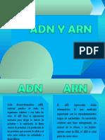 adn-arm