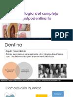 Histología del complejo pd