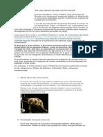Flora y Fauna Nativa Chilena en Peligro de Extincion