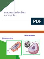 4 Medio Biologia Elec El Nucleo de La Celula Eucarionte 16-03-2015