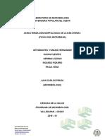 caracteristicas morfologicas de las bacterias.docx
