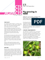 Fig Growing Nsw