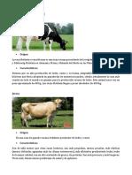 GANADO BOVINO DE LECHE.docx