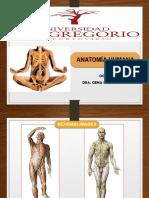 Anatomia I