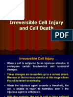 Irreversible Cell Injury