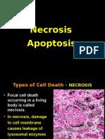 Necrosis and Apoptosis