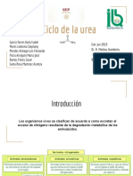 1.3 Ciclo de la urea.pdf