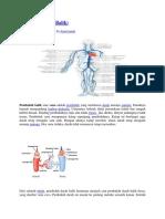 Vena anatomi.docx