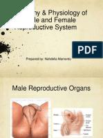 femalereproductiveorgan.pptx
