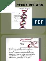 5.-ADN.pptx