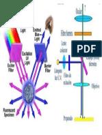 fluorescencia microscopio