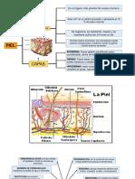 chistología.pptx