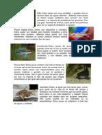 TIPOS DE ANIMALES.docx