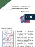Clase  Sist cardiovascular y Electrofisiologia Cardiaca 19-1.pptx