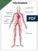 Sistema-Circulatorio-para-imprimir.pdf