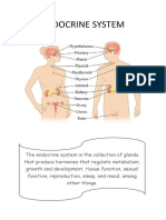 ENDOCRINE SYSTEM.docx