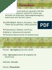 plasmodium 5