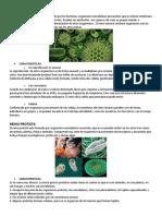 CLASES DE ANIMALES CON CARACTERISTICAS.docx