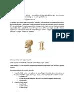 Miología Cervical