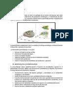 GEOMETALURGIA.docx