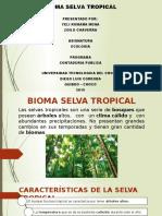 Diapositivas de La Selva Tropical