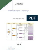 8- Maturação de Linfocitos