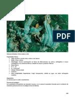100 SP Compendio de Mineralogia
